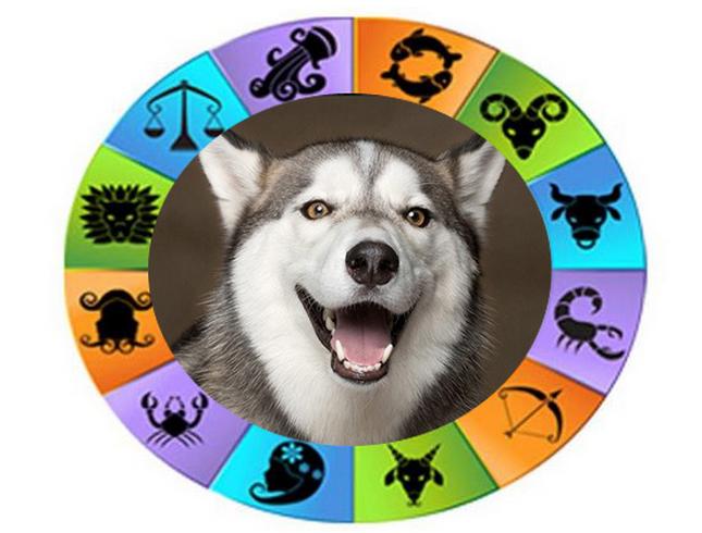 породы собак относящиеся к знаком зодиака